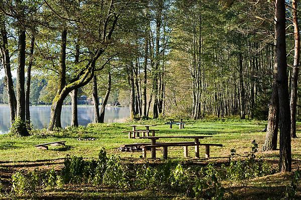 Siaurine-Lavyso-stovyklaviete-96210639